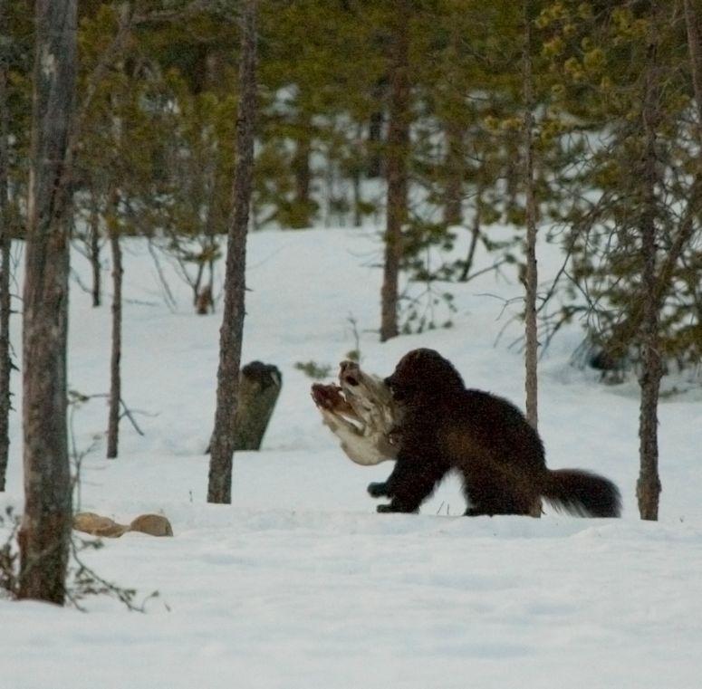 djurarter i sverige