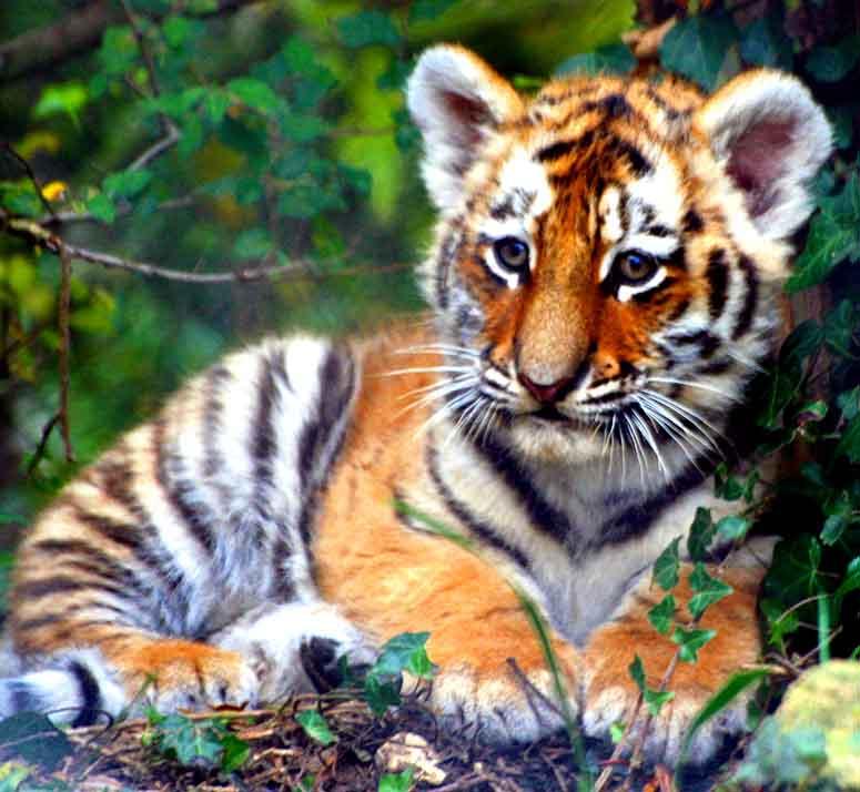 Världens 10 sötaste djurungar