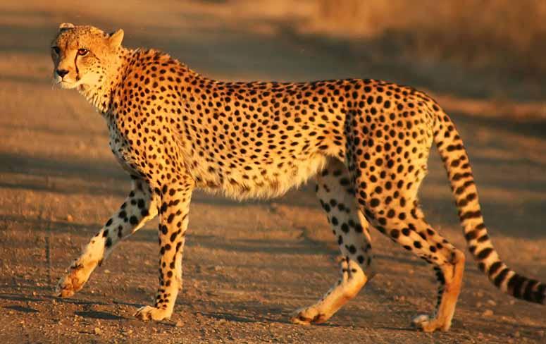 Bildresultat för snabbt djur